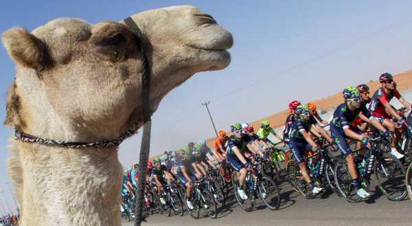 Cycling: Dubai Tour 2016 - Cammello a bordo strada (Foto Ansa)