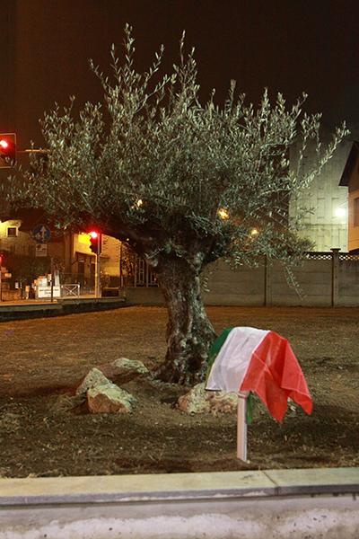 Ulivo piantato in onore di Gino Bartali (Foto di Kia Castelli)