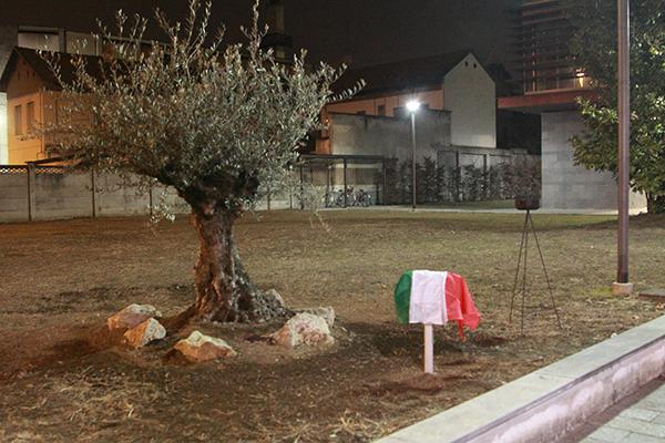 Gino Bartali, Grande tra le Nazioni : l'Ulivo piantato dall'Amministrazione comunale di Verano Brianza (Fotoreporter Giuseppe Castelli detto Kia)